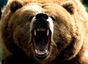 Секс медведей с женщинами