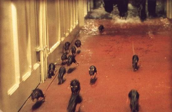 Крысы бегут по палубе