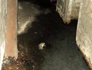 Животное в подвале