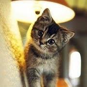 Котик под лампой