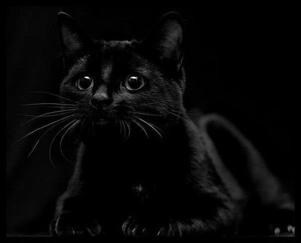 Кошка чёрной масти