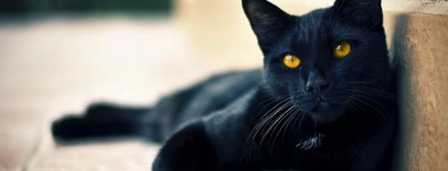 Чёрная кошка в доме