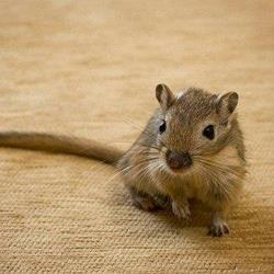 Мышка в комнате