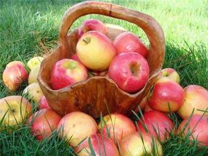 Толкование снов собирать яблоки фото