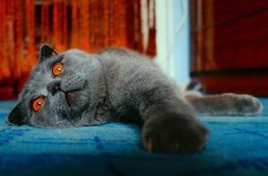 Дохлая кошка с оранжевыми глазами