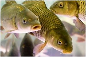 К чему снится ловить рыбу на удочку женщине маленькую
