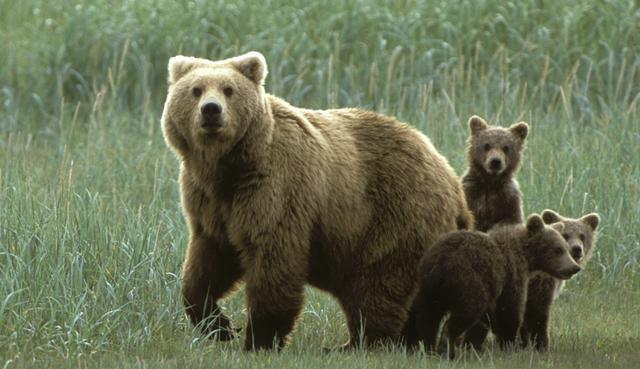 Медведь во сне гонялся парень