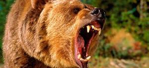 Толкование снов медведь нападает фото