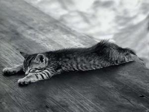 Больная кошка лежит на брюхе
