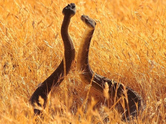 Змеи в траве
