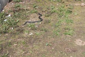 Змея в саду