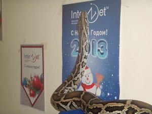 Змея в офисе
