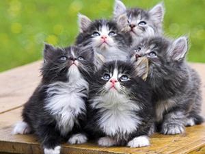 К чему снятся котята много маленьких фото
