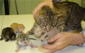 Кошка родила