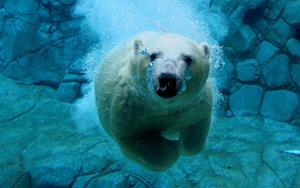 Медведь подольдом