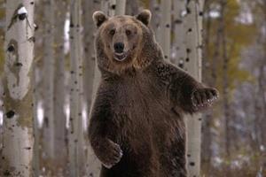 К чему снится сон убегать от медведя фото