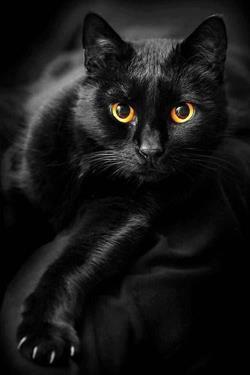Чему снится полуживая кошка к