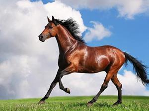 Фото К чему сниться лошадь и кровь