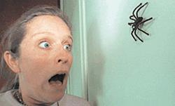 Испугалась паука