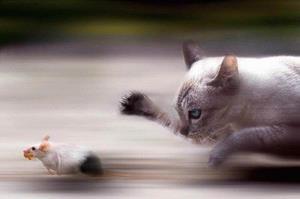 Убегает от кошки