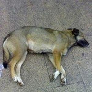 Собаку убил сонник муж