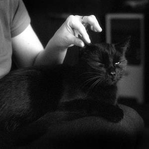 Гладит черного кота