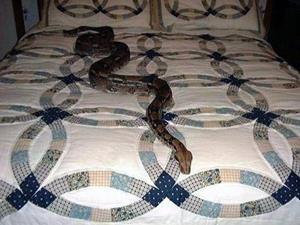 Змея в постели