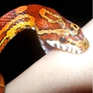 Кусает змея