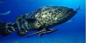Большая океанская рыба