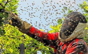 Преследование пчёл