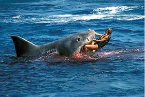Попасть в пасть акулы