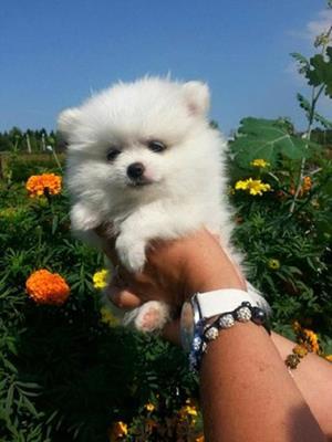 Приласкать щенка