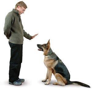 Хозяин собаки