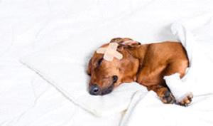 сниться коли вкусила собака