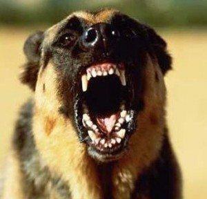 Агрессивная собака