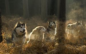 Собаки в лесу