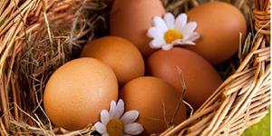 Собирать куриные яйца во сне