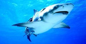 Снится акула