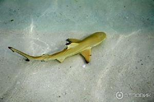 Акула на безопасном расстоянии