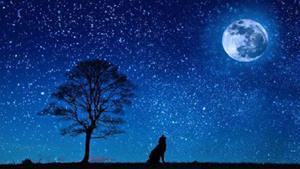 Снится звёздное небо