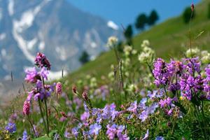 Луг с весенними цветами