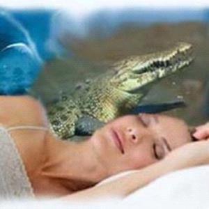 Снится крокодил женщине