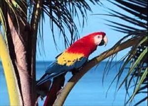 Снится попугай