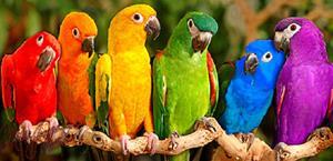Сообщество попугаев