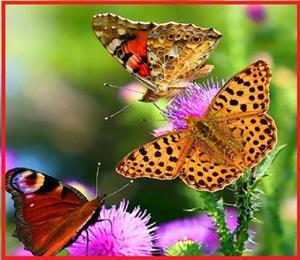 Снятся бабочки