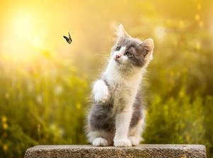 Котёнок играет с бабочкой