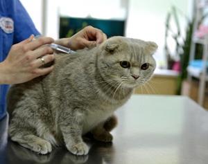 Приём у ветеринара