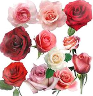 Снятся розы