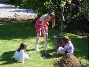 Сажать плодовые деревья