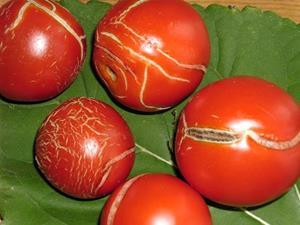 Треснутые томаты